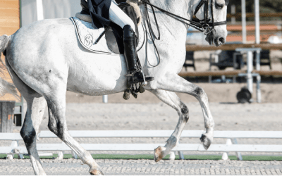 Equestrian Marketing: How To Stand Out